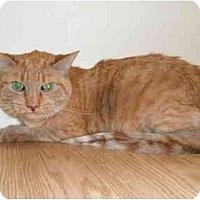 Adopt A Pet :: Gordon - Milwaukee, WI