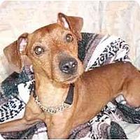 Adopt A Pet :: Nene - Phoenix, AZ