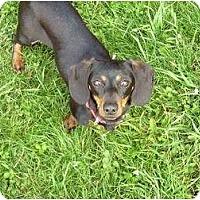 Adopt A Pet :: Gloria - San Jose, CA