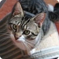 Adopt A Pet :: Robbie - Vancouver, BC