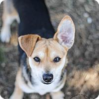 Adopt A Pet :: KK - Arlington, TX