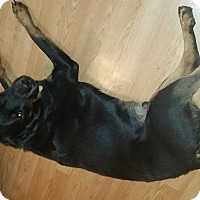 Adopt A Pet :: Rocco - Brewster, NY
