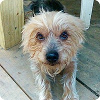 Adopt A Pet :: Toby - Morgantown, WV