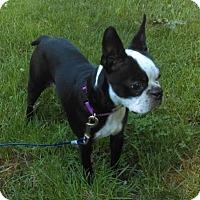 Adopt A Pet :: Maisie - Jackson, TN