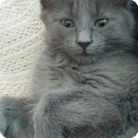 Adopt A Pet :: Kricket - North Highlands, CA