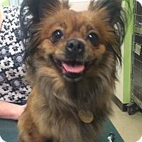 Adopt A Pet :: Ida - Oak Ridge, NJ