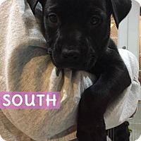 Adopt A Pet :: South - Berwick, ME