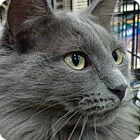 Adopt A Pet :: Maudie - Drippings Springs, TX
