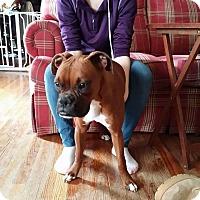 Adopt A Pet :: Roxie Roo - Newport, KY