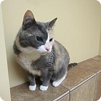 Adopt A Pet :: Svetlana *Petsmart GB* - Appleton, WI