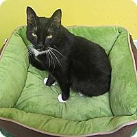 Adopt A Pet :: Gina - Mobile, AL
