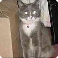 Adopt A Pet :: Missy - Pasadena, CA