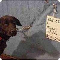 Adopt A Pet :: Mandi/Adopted! - Zanesville, OH