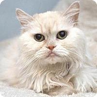 Adopt A Pet :: Tiffany - Chandler, AZ
