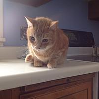 Adopt A Pet :: Lou - Rochester, NY