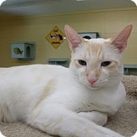 Adopt A Pet :: Pax - Lake Charles, LA