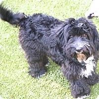 Adopt A Pet :: Robbie - adoption pending - Norwalk, CT