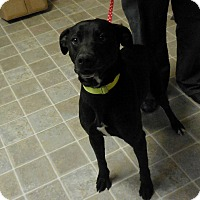 Adopt A Pet :: Jack Black - Salem, WV