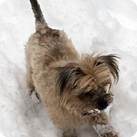 Adopt A Pet :: Pense - Toronto, ON