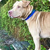 Adopt A Pet :: Zeek - Lakeland, FL