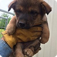 Adopt A Pet :: Silly - Hohenwald, TN