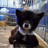 Adopt A Pet :: Faith - Studio City, CA