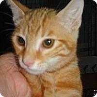Adopt A Pet :: Morgan - Escondido, CA