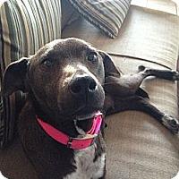 Adopt A Pet :: Jackie - Milford, CT