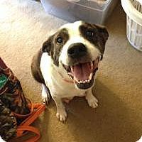 Adopt A Pet :: Sweet Skyler - Marlton, NJ