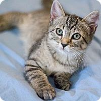 Adopt A Pet :: AJ - Chicago, IL