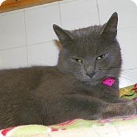 Adopt A Pet :: Java - Dover, OH
