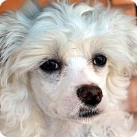 Adopt A Pet :: Effie - Bridgeton, MO