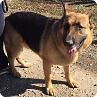 Adopt A Pet :: Rocky - 72 lbs - Texico, IL
