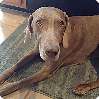 Adopt A Pet :: Greta (w/sister Heidi) - Grand Haven, MI