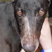 Adopt A Pet :: Barney - Tucson, AZ
