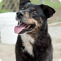 Adopt A Pet :: Lucy - Key Biscayne, FL