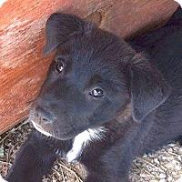 Adopt A Pet :: Lexi - Lakewood, CO