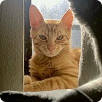 Adopt A Pet :: Sunburst - Brooklyn, NY