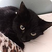 Adopt A Pet :: Jetta - Medina, OH