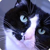 Adopt A Pet :: Bella - Lincoln, NE