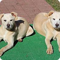 Adopt A Pet :: Nora - Sagaponack, NY