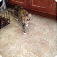 Adopt A Pet :: Laverne - Mobile, AL