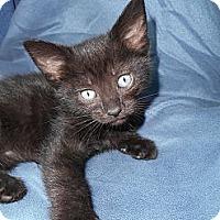 Adopt A Pet :: Darla - Richland, MI