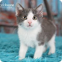 Adopt A Pet :: Citrine - Plymouth, MN
