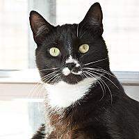 Adopt A Pet :: Kung Pao - Wilmington, DE