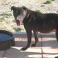 American Pit Bull Terrier Mix Dog for adoption in Boaz, Alabama - Georgie