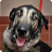 Adopt A Pet :: Rocco - Daytona Beach, FL