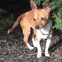 Adopt A Pet :: Rodney - Dayton, OH