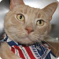 Adopt A Pet :: THOR - Clayton, NJ