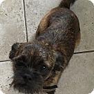 Adopt A Pet :: Mia (ETAA)